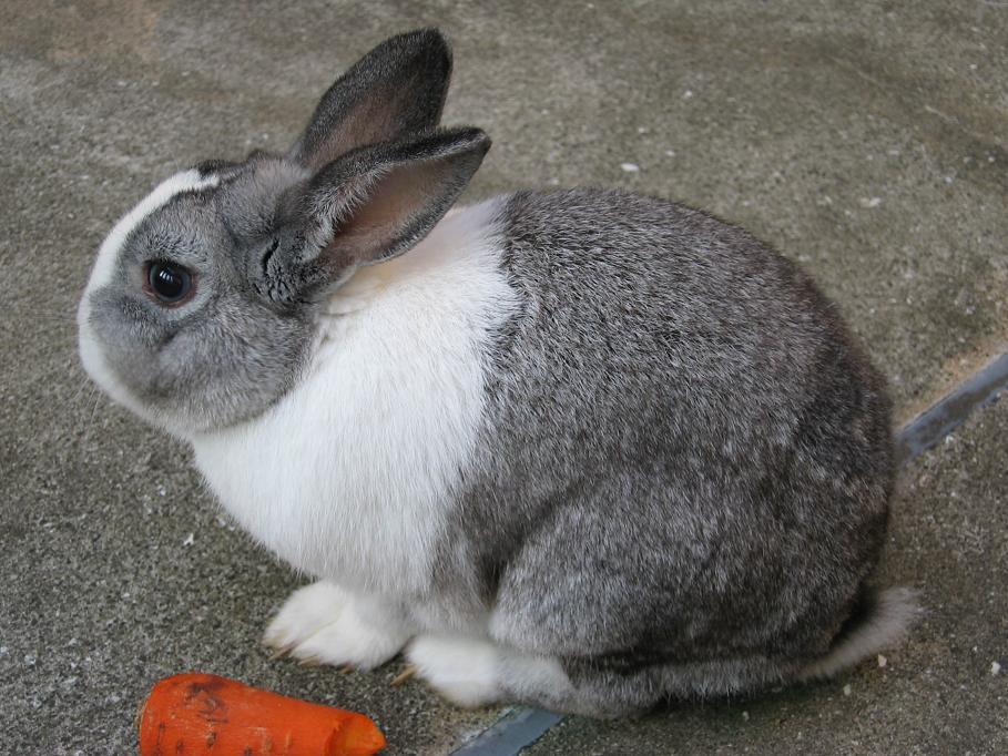 ウサギの画像 p1_37