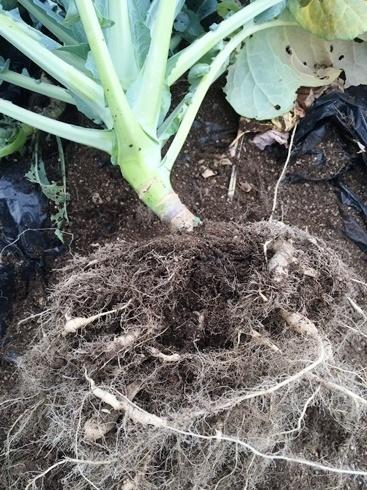 土壌処理6月3日1.jpg