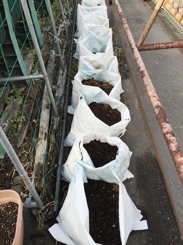 袋でジャガイモ栽培3月22日.jpg